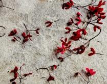 winged seeds